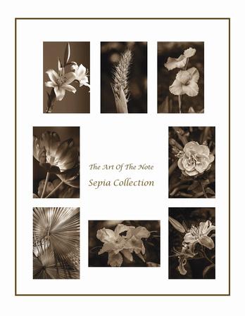 Sepia Collection