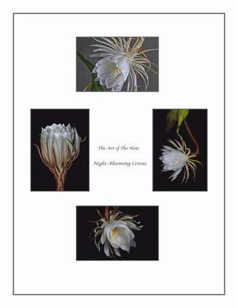Cereus Collection