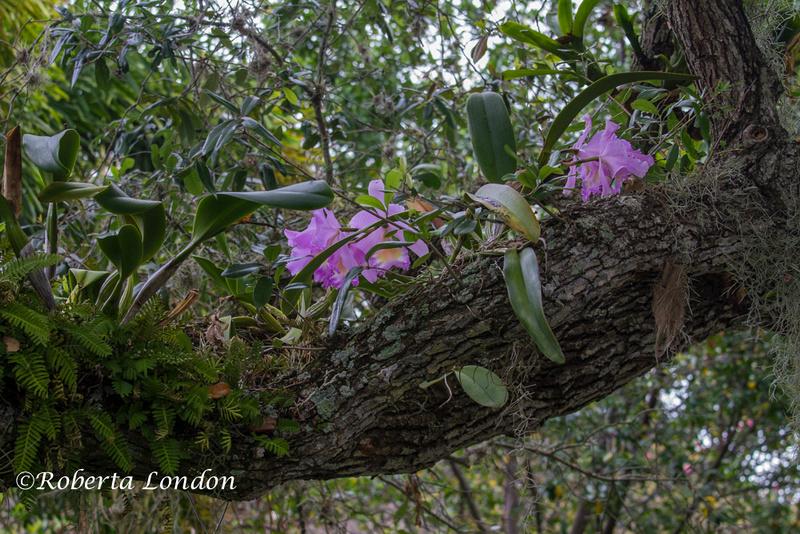 Roberta London Photography Gardenography